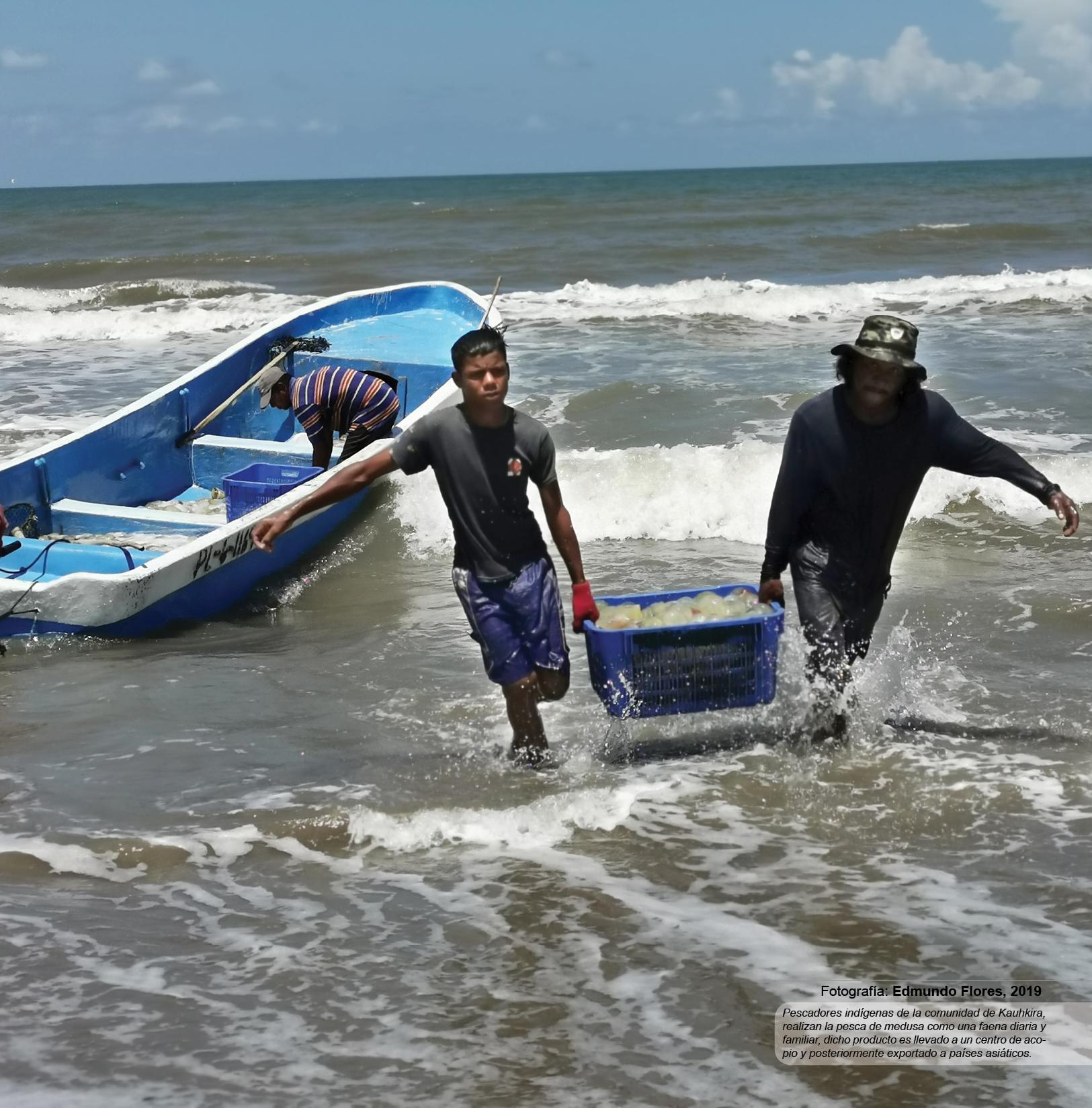 Pescadores indígenas de la comunidad de Kauhkira, realizan la pesca de medusa como una faena diaria y familiar, dicho producto es llevado a un centro de acopio y posteriormente exportado a países asiáticos.